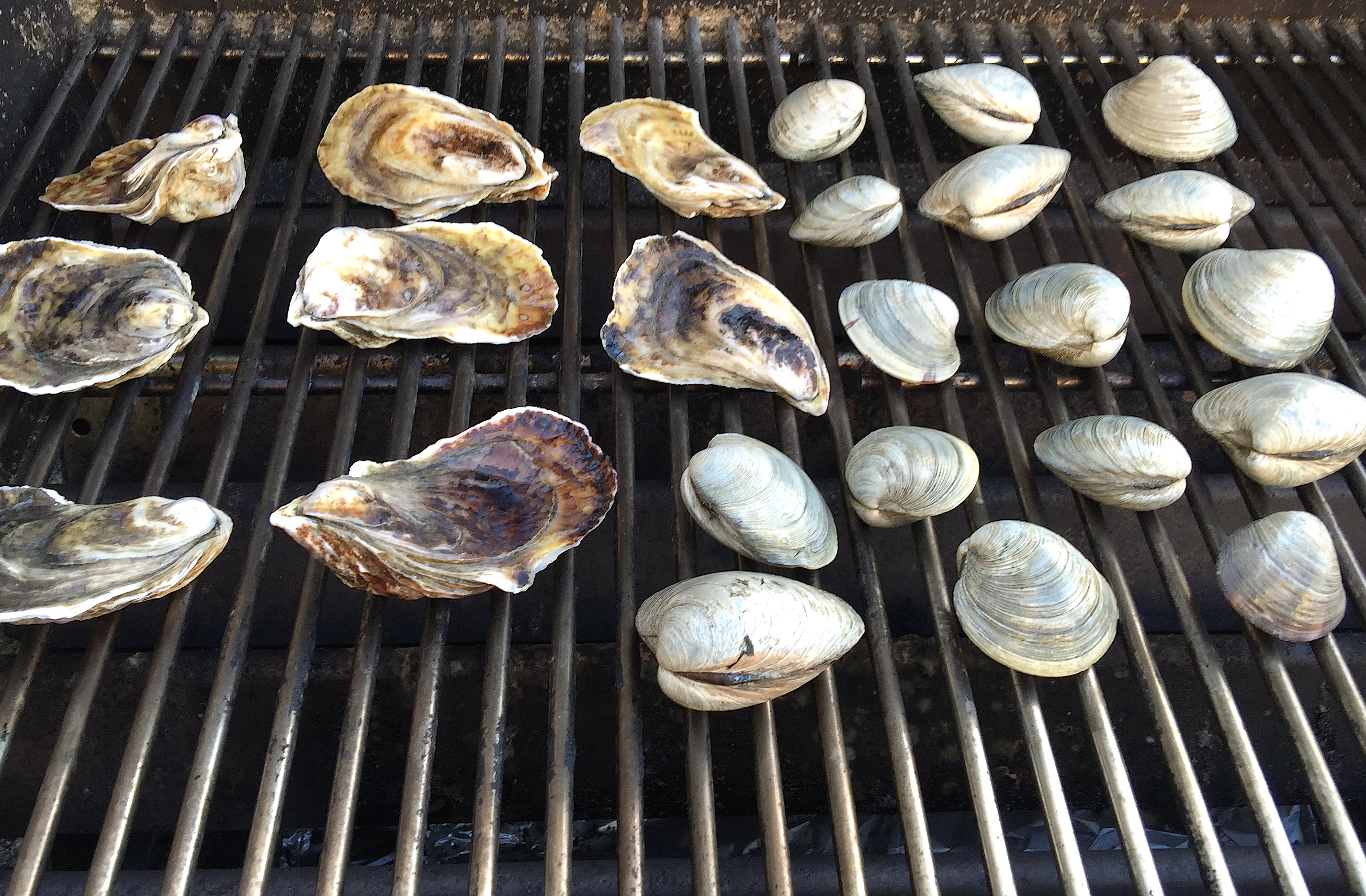 Grilled clam
